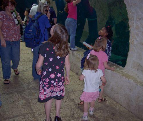 Dallas Aquarium 078-2