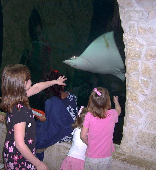 Dallas Aquarium 079-2