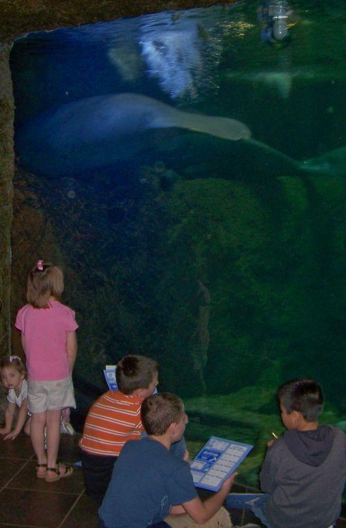 Dallas Aquarium 117-2