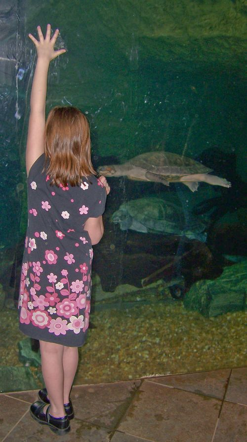 Dallas Aquarium 132-2